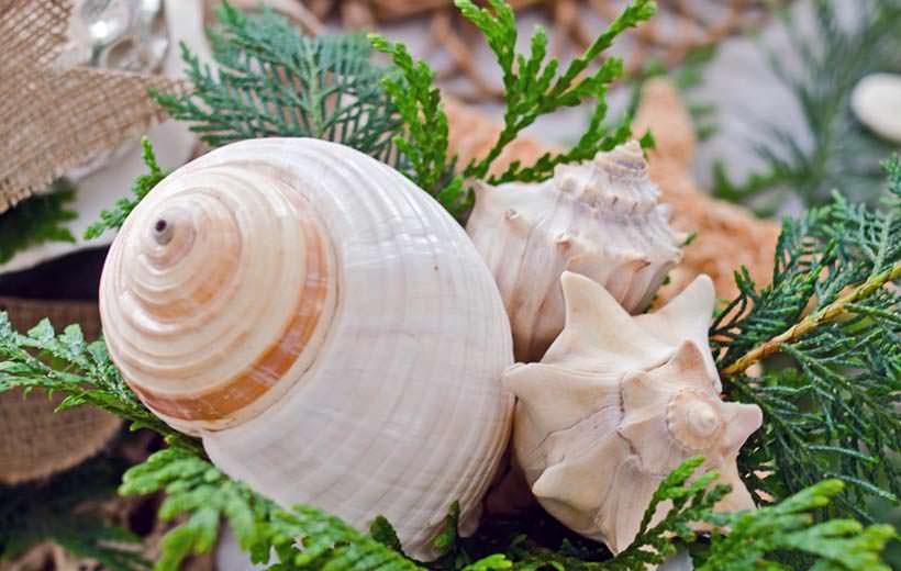 shells 3-1